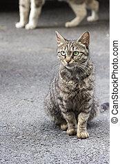 Homeless Caucasian cat in Tbilisi