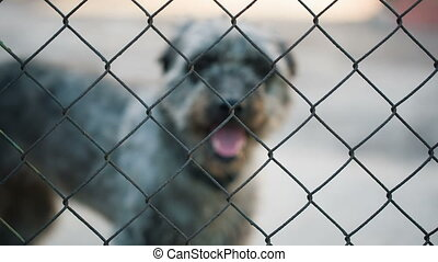 Homeless Dog Behind bars - Dog Behind Metal wire fence or...