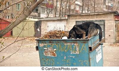 Homeless Dog Eating Garbage