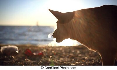 Homeless dog eats a fish on a sunset beach at blurred bokeh...