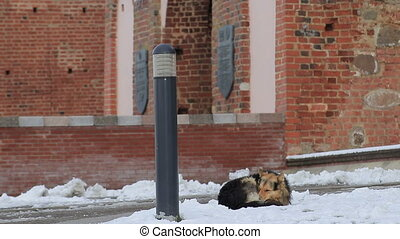 Homeless dog freezes on the snow near the building