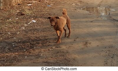 Homeless Dog in the Street of the City. Stray dog walking the street in the autumn.