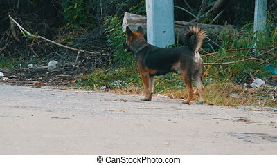 Homeless dog on a dirty, abandoned metropolis - A homeless...