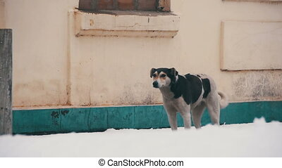 Homeless Dog on a Snowy Street in Winter. Slow Motion
