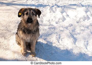 Homeless dog on a winter street.