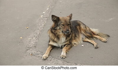 Homeless Dog on the Road