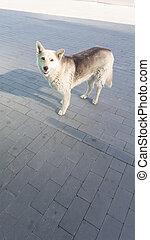 Homeless dog on the sunny street