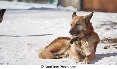homeless dog sits on the snow in the winter squinting eyes from a strong wind. dog problem of homeless pets