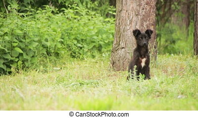 Homeless Dog Sitting in the Grass. Young wild stray black dog standing and sniffing in the grass. Black homeless dog a playful puppy in the street. Full HD 1920 x 1080p. 29,97 fps.