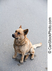 Homeless dog sitting on a road