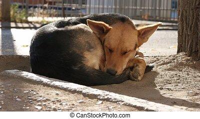 Homeless Dog Sleeping and Than Wake Up and Looking at Camera