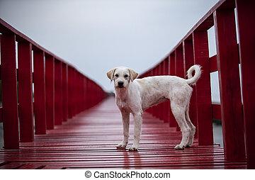 homeless dog standing on red wood bridge