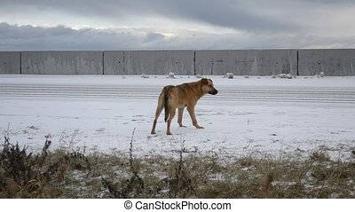 Homeless dog waiting for somebody by the side of the road