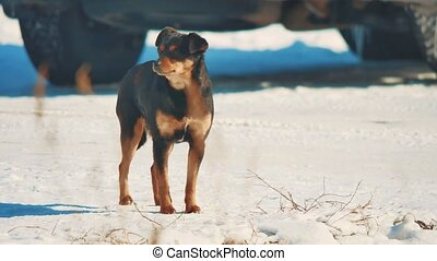 homeless dog winter coldly. homeless animals pets problem....