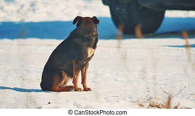 homeless dog winter coldly. homeless animals pets problem. brown dog in the snow lifestyle