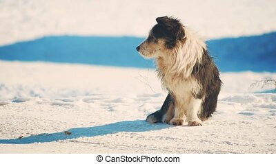 homeless dog winter coldly. homeless animals pets problem. small black and white dog in the snow lifestyle