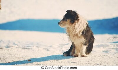 homeless dog winter coldly. homeless animals pets problem. street cat froze up redhead sits freezing in winter sick lifestyle