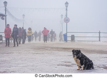 homeless dog with frozen fur sitting near the bridge in...