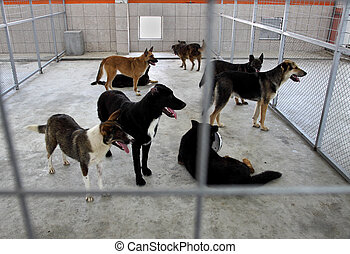 Homeless dogs shelter - Homeless dogs behind fence in...