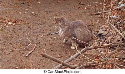 Fluffy cat turning back - Homeless Fluffy cat turning back