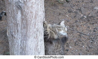 Homeless Gray cat climbs claws at a tree in the park.
