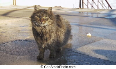 Homeless Gray Cat on the Street in Early Spring