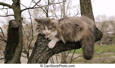Homeless gray cat sleeping on a tree in the spring.