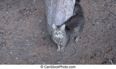 Homeless Gray cat walking near a tree in the park
