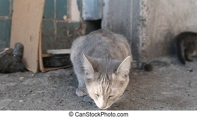 Homeless Gray Cat with Adult Kittens on the Street. Stray Kittens Hide Between the Slabs of a Residential Building. Dirty bowls with food remnants. Taking care and Feeding wild animals. Slow Motion.