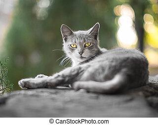 Homeless gray kitten resting on a stone fence in summer.