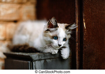 Homeless grimy little white kitten. A beautiful cat with blue eyes.