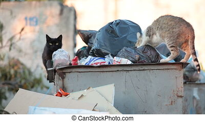 homeless hungry cat digging in overflowing dumpsters in search of food