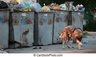 homeless hungry dog