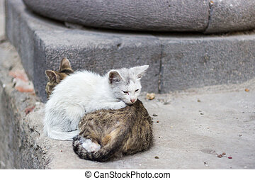 Homeless kittens try to keep warm on the street