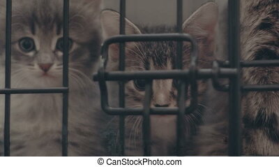 Homeless kitty in shelter cage waiting for adoption, close...
