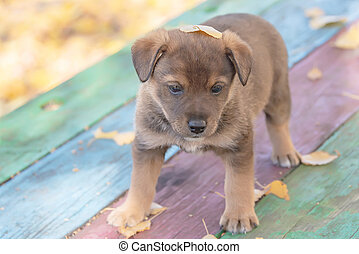 homeless mongrel puppy in fall foliage. in animal shelter