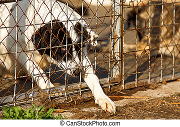homeless old dog shelter - A homeless old dog is trying to...