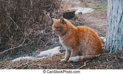 Homeless Red Cat on the Street in Winter Park. Funny Urban Cat