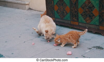 Homeless Red Cat with a Kitten on the Street Eating Food