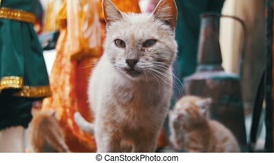 Homeless Red Cat with Kittens Looking at the Camera on the...