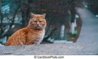 Homeless Red Cats on the Street Park in Early Spring. Funny Urban Cat in Slow Motion