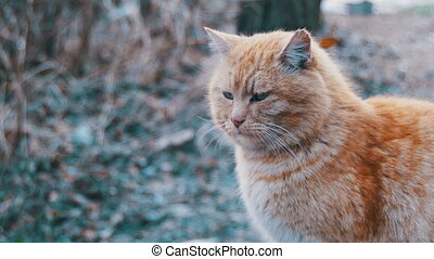 Homeless Red Cats on the Street Park in Early Spring. Funny Urban Cat.