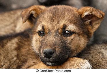 Homeless, sad puppy muzzle close up. Soft focus