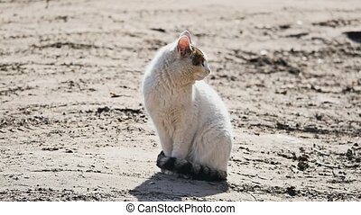 Homeless sad white cat looking at the camera