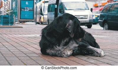 Homeless Shaggy Dog lies on a City Street against the...