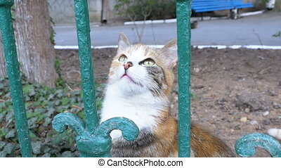 Homeless three-colored cat walks in the park outside the...