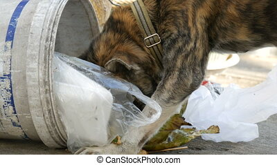 Homeless tiger-colored dog is looking for food in a trash...