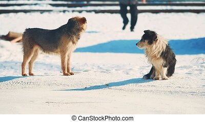 homeless two dogs winter coldly. homeless animals pets problem. small black and white dog in lifestyle the snow