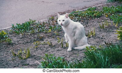 Homeless White Cat on the Ground in the City Park. Slow...