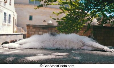 Homeless White with Gray Cat Sleeps on the Street